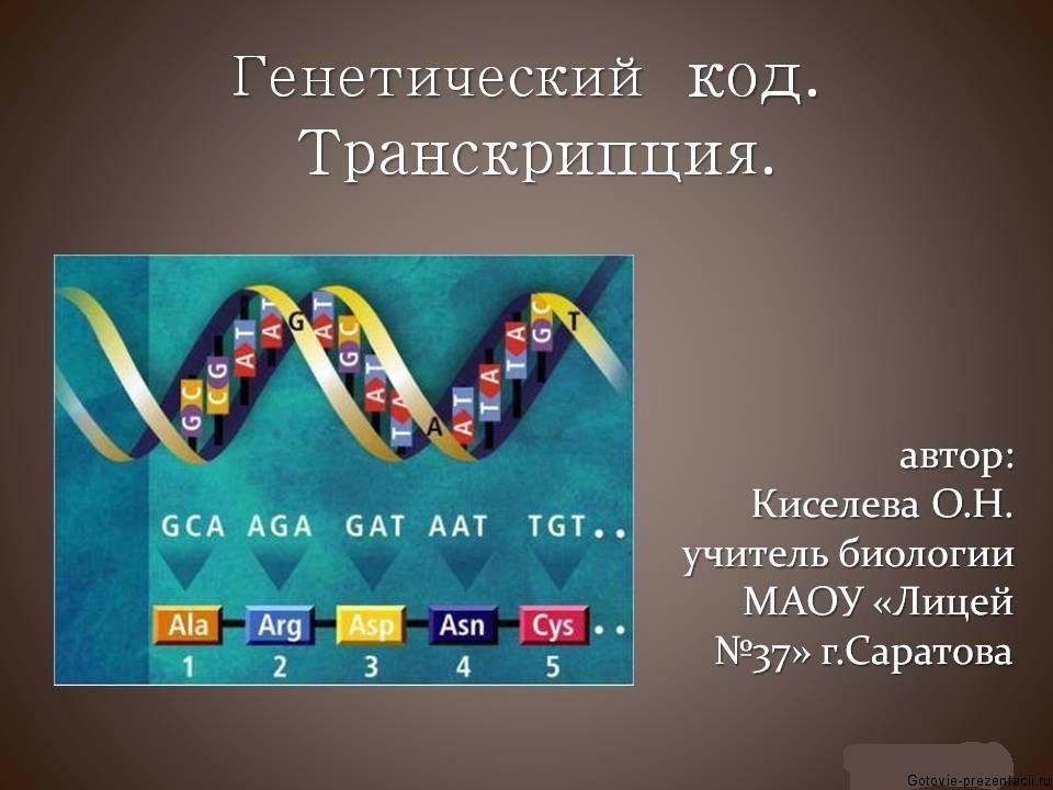 Презентация по биологии генетический