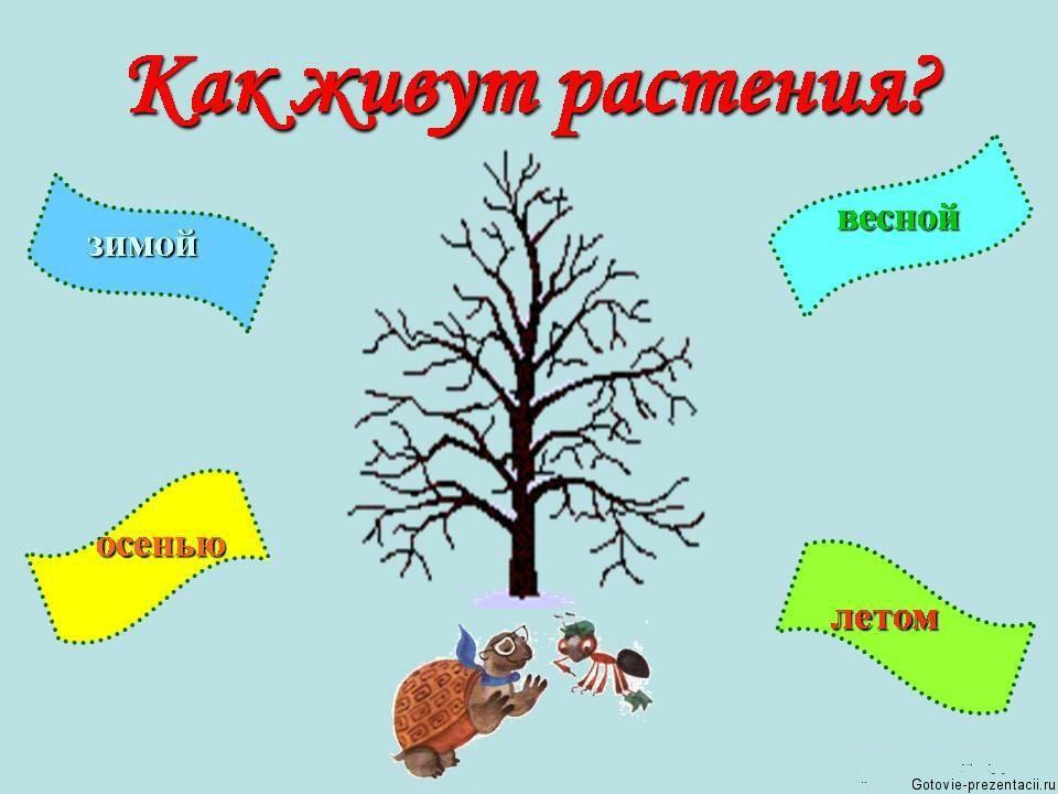 Окружающий мир схемах для детей