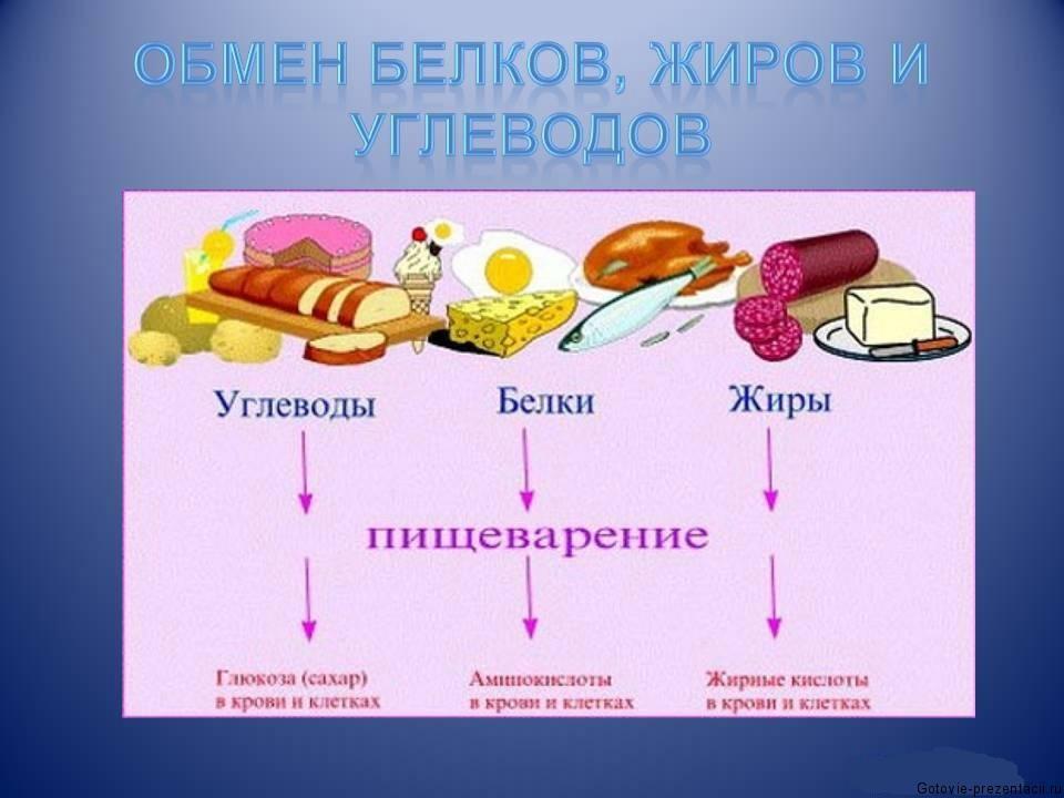 Биология жиры презентация