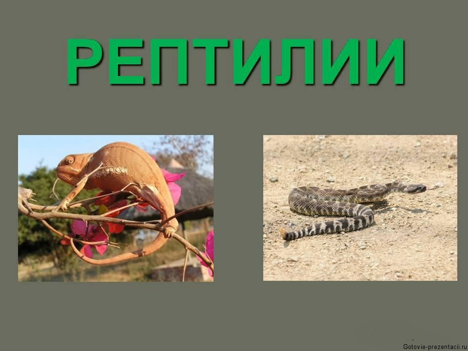 Презентация по биологии