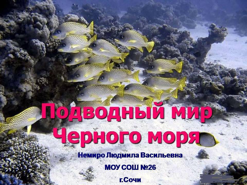 Скачать презентацию черное море